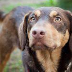 A melhor decisão: adoptar um animal abandonado