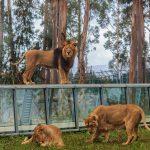 Zoo Santo Inácio: há 20 anos a criar habitats de amor
