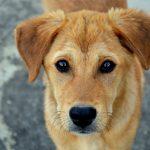 Porquê adotar um animal abandonado?
