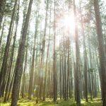 A caminhada mindfulness