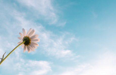 cultivar a esperança
