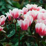 8 Dicas para ter as plantas de exterior bonitas no Inverno