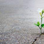 É possível renascer após um trauma?