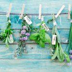 Como cultivar plantas aromáticas em casa?