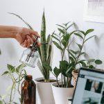 Como identificar e eliminar pragas comuns nas plantas?